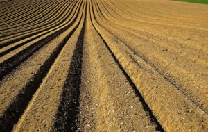 Wheat production likely to hit 100 MT target this year